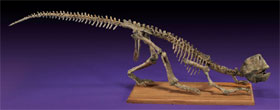 Fine and complete dinosaur skeleton, Psittacosaurus sp., Cretaceous, Central Asia, 39 in. long, est. $10,000-$12,000. I.M. Chait image.